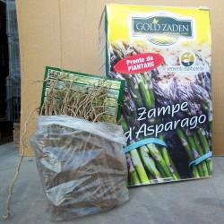 Zampe di Asparagi