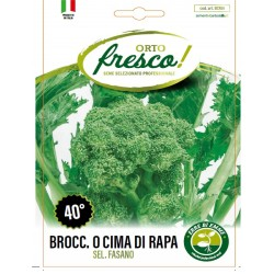 BROCCOLETTO o CIMA DI RAPA 40°