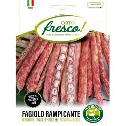 FAGIOLO RAMPICANTE BARLOTTO LINGUA DI FUOCO 2 SEL. IMPERIALE